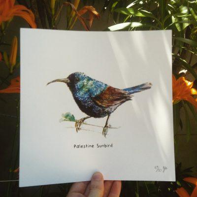 Palestine Sunbird print
